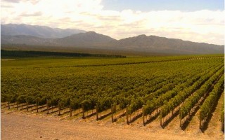 Precios de vinos de san juan
